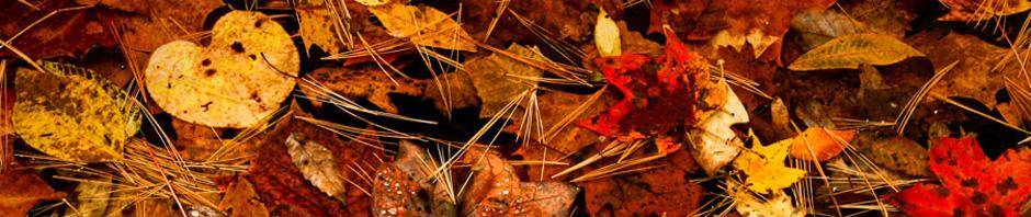 autumn-banner