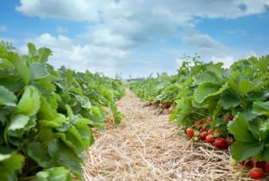 biolandbouw